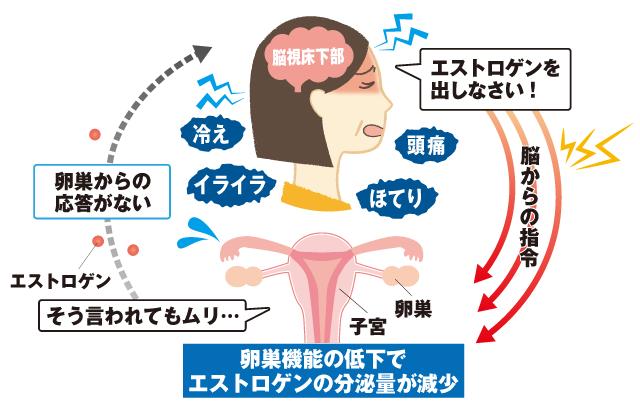 卵巣機能の低下でエストロゲンの分泌量が減少